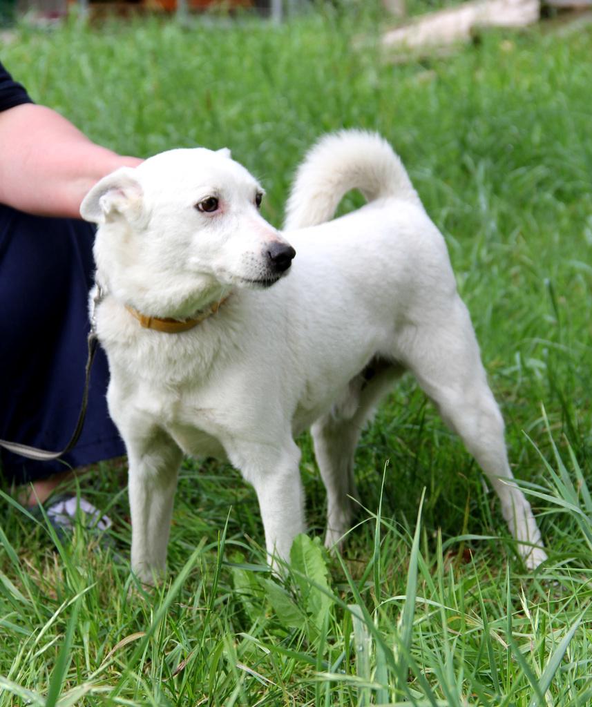 Albin, sześcioletni pies rasy mieszanej.jpeg