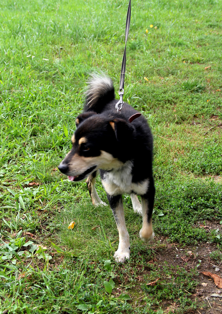Stefan, siedmioletni pies rasy mieszanej1.jpeg