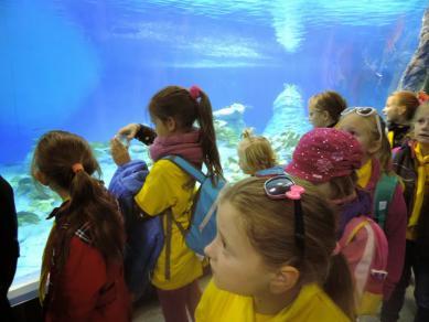 Galeria ZHP zoo