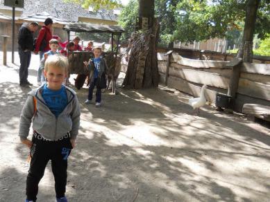 Galeria zoo zss nr1