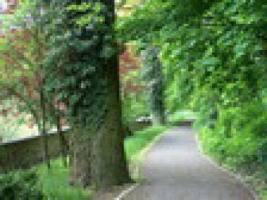 Park w Rogowie Opolskim 1.jpeg