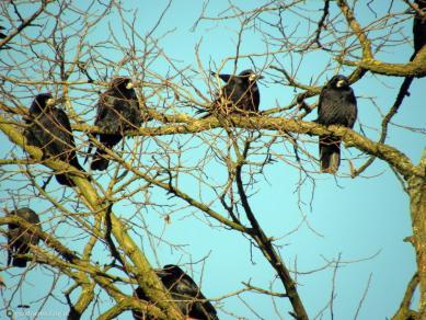 2305029_ptaki--siedza-na-drzewie.jpeg