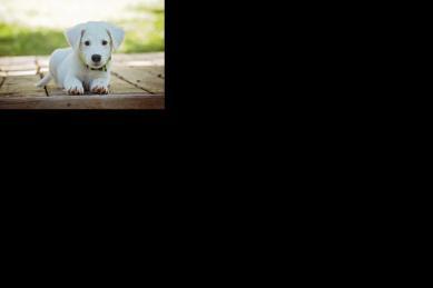 puppy-1903313_1920.jpeg