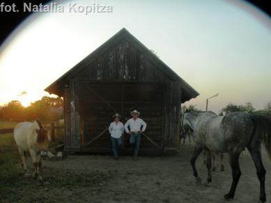 Galeria Kopitza 2013